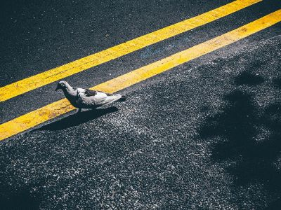 a bird in the street