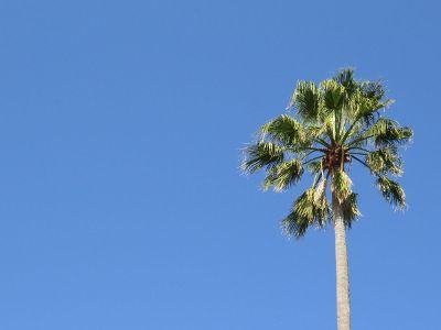 single palm tree against sky