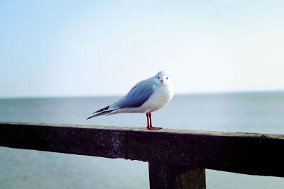bird looking at you