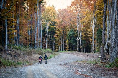 cyclists among the tall trees