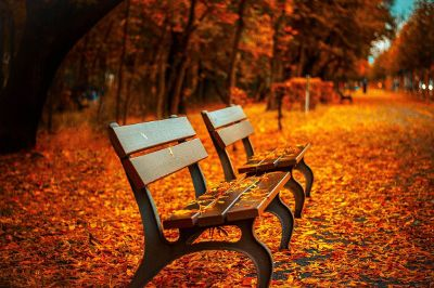 autumn scene in a park with two benches