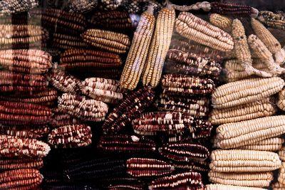 various corn