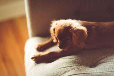 sleepy puppy stretches