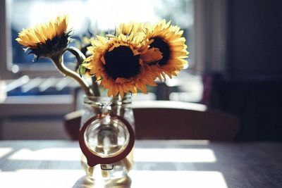 sunflowers in bell jar