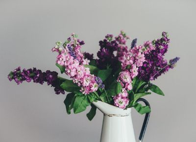purple flowers in a white jug