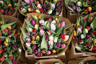 colorful tulips in paper bags