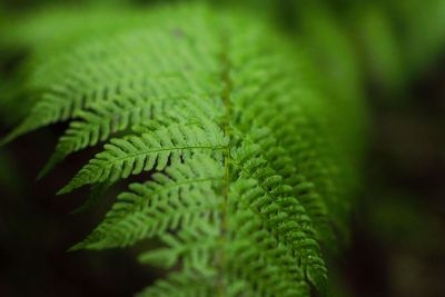 fern close up