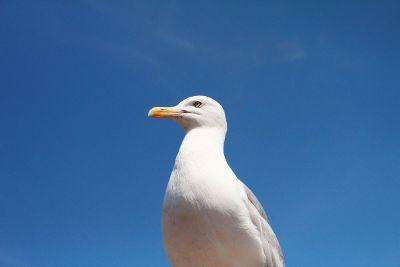 single bird