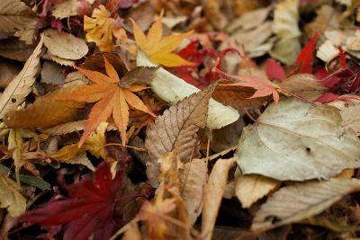 crisp leaves