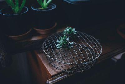 plants on a metal grid