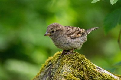 small bird perched on rock