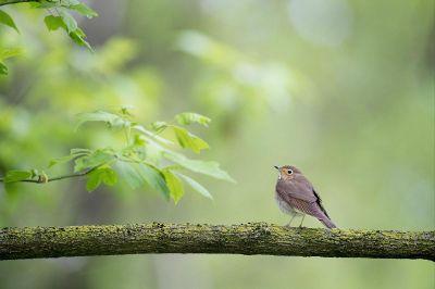 bird on a branch with leaf