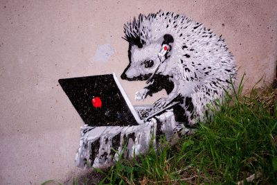 hedgehog on laptop