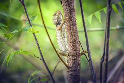 lizard on a stem