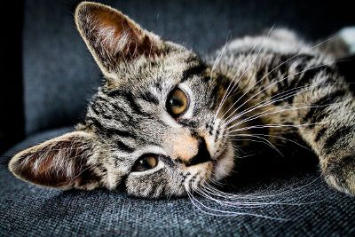 cute kitten relaxing on a couch
