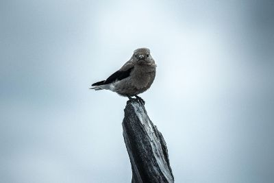bird perched and watching