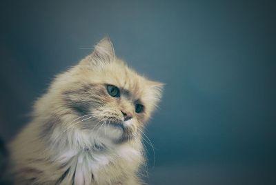 cat pondering life