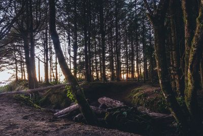 woody green forest with sunset