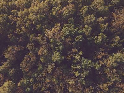 birdseye view of forest