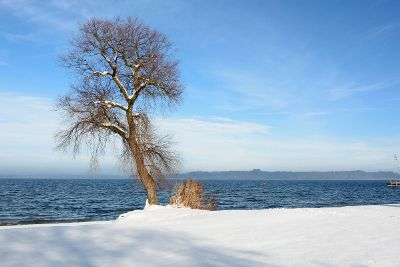 tree on snow covered beach