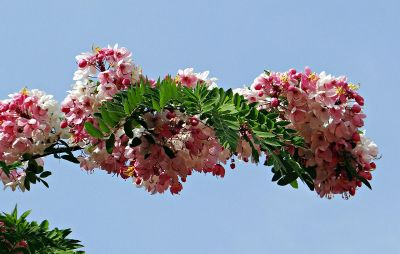 tree branch with leaves and flowers