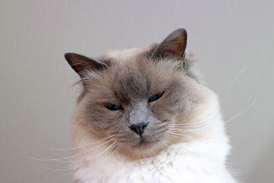 sazzy cat