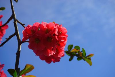 blue sky with red flowers