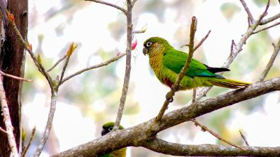 parakeet on the tree branch