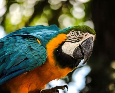 blue green and yellow parrot