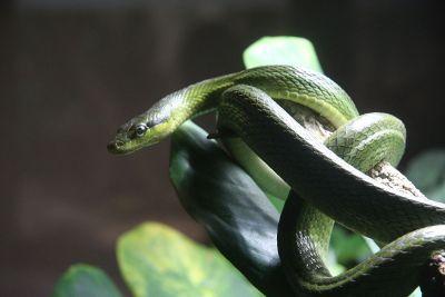 snake on a limb