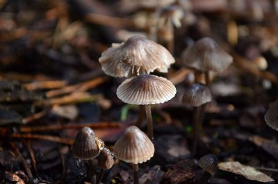 group of wild mushrooms
