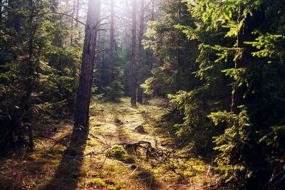 sunny dense forest