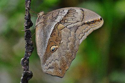 moth climb