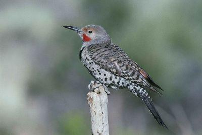 speckled bird on a stick