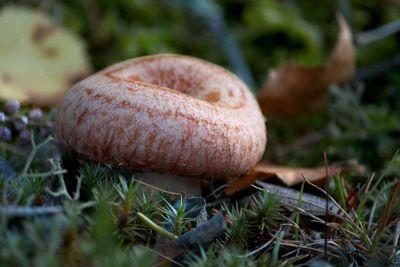 mushroom in grass