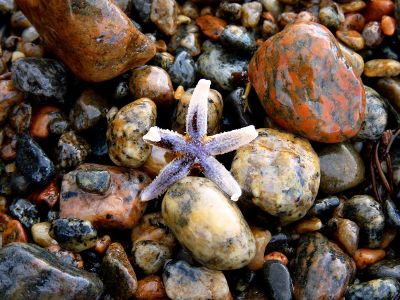 starfish on rocky beach