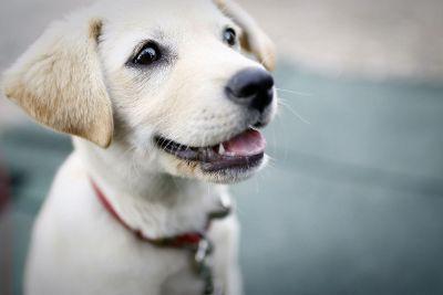 white dog smiling