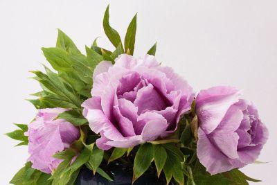purple delicate flowers