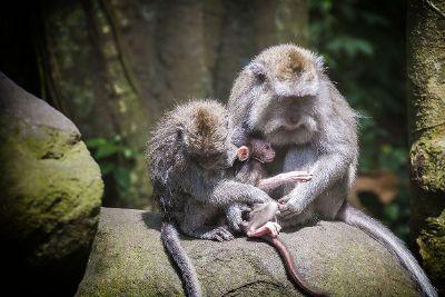 monkey family poses