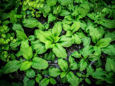 green plants in the ground