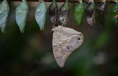 emerging moth
