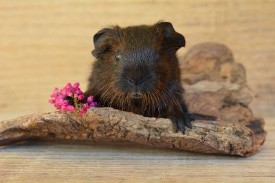 rodent with flowers