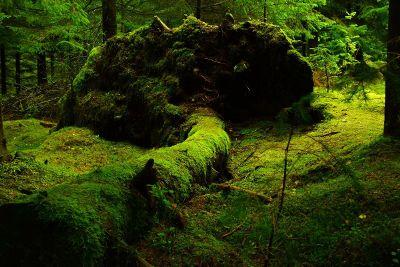 green hike