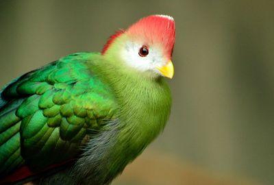 colourful looking bird