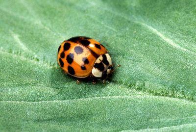 crawling lady bug