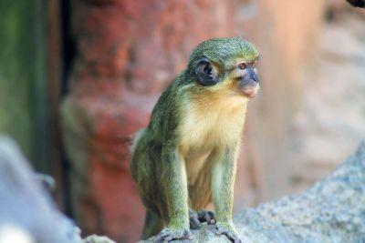 monkey sit on a tree