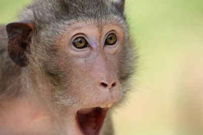 monkey suprise