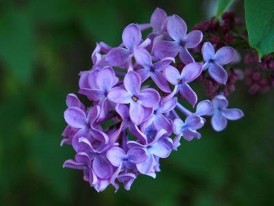 purple flower on tree branch