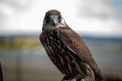 bird staring