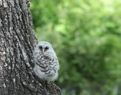 white owl on a tree